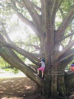 大自然の木の写真・画像素材[4800089]