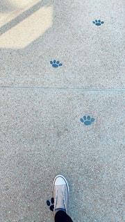 青と白の靴の写真・画像素材[3032519]