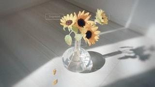 向日葵の花束と綺麗な日差しの写真・画像素材[3546945]