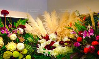 花のクローズアップの写真・画像素材[2369813]