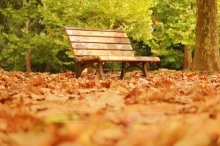 落ち葉の絨毯の写真・画像素材[2665238]