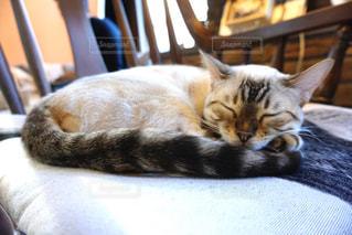 猫,動物,屋内,ペット,寝る,人物,ネコ