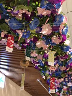 花のクローズアップの写真・画像素材[2375525]