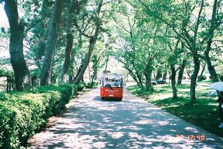 komorebi roadの写真・画像素材[2432657]