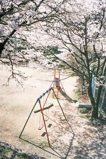 公園,春,桜,ブランコ,木漏れ日,光,フィルム,自然光,フィルム写真,フィルムフォト