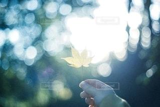 autumnの写真・画像素材[2653087]