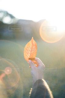 秋の写真・画像素材[2890955]