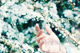 花を持つ手の写真・画像素材[2890978]