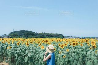 夏空の写真・画像素材[3142357]
