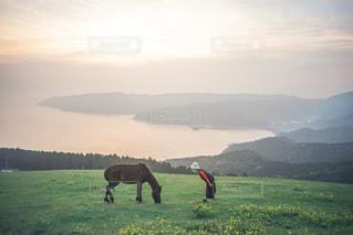 都井岬の写真・画像素材[3142370]