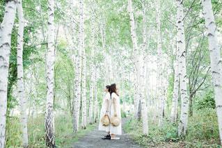 白樺並木の写真・画像素材[3142388]