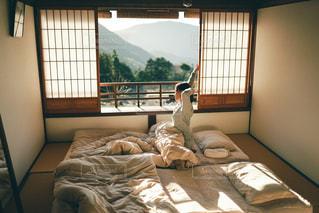 おはよう!の写真・画像素材[3172225]