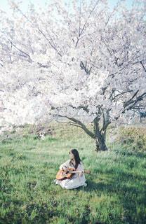 桜と音楽の写真・画像素材[3200197]