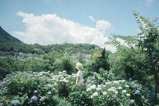 紫陽花の写真・画像素材[3376901]