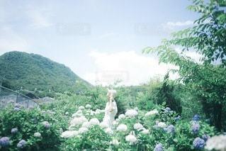 紫陽花の写真・画像素材[3376900]