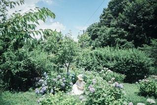 紫陽花の写真・画像素材[3376912]
