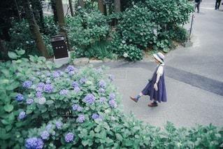 紫陽花の写真・画像素材[3376929]