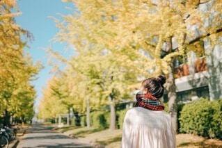 秋の写真・画像素材[3783843]