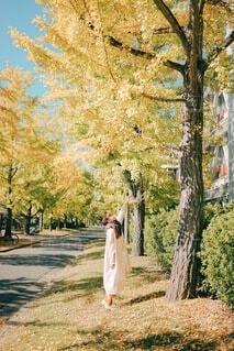 秋の写真・画像素材[3783845]