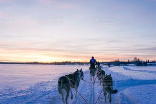 フィンランドの写真・画像素材[4137757]