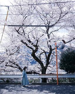 春の写真・画像素材[4212578]