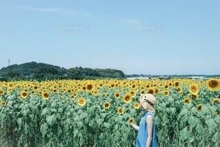 夏の写真・画像素材[4212581]