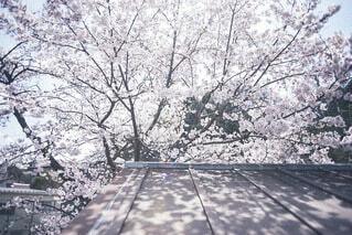 春の影の写真・画像素材[4231262]
