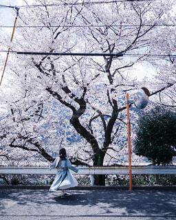 桜の写真・画像素材[4276810]