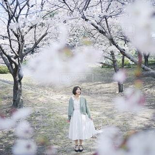 春の写真・画像素材[4281489]