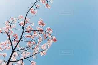 春の写真・画像素材[4311354]