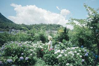 お庭の写真・画像素材[4334912]