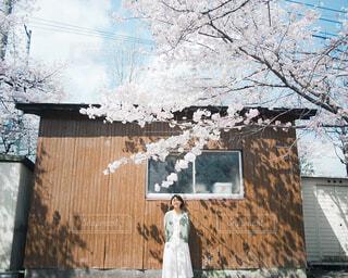 桜の写真・画像素材[4437144]