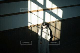 光と影の写真・画像素材[4437153]