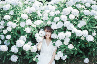紫陽花ガールの写真・画像素材[4609847]