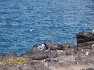 水域の隣の岩の上に座っている鳥の写真・画像素材[2376329]