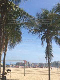 ヤシの木の隣の砂浜の写真・画像素材[2376370]
