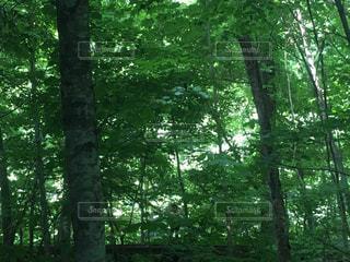 緑に囲まれてキャンプしたい⛺️の写真・画像素材[2376411]