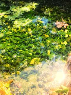 わき水の写真・画像素材[2445128]