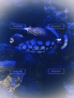 ドット柄の魚の写真・画像素材[2479327]