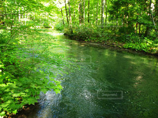 水域を流れる川の写真・画像素材[3177648]