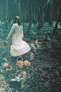 森の中を踊る少女の写真・画像素材[2377979]