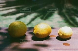 瀬戸内レモンの写真・画像素材[3844276]
