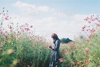 コスモス畑の女の子の写真・画像素材[3900276]