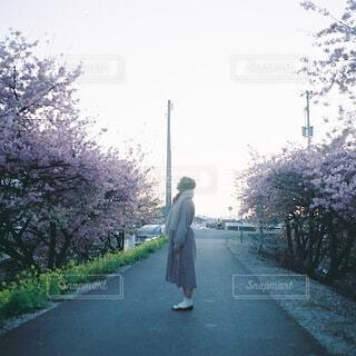 河津桜の季節の写真・画像素材[4075027]