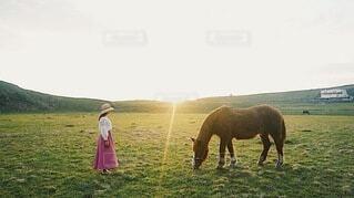 夕方。の写真・画像素材[4101669]
