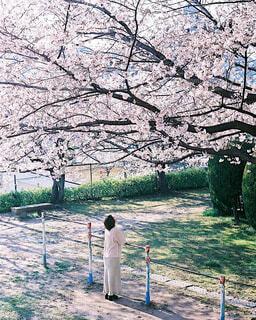 桜を見に、地元の公園を散歩の写真・画像素材[4229446]