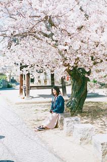 満開の桜、嬉しいねの写真・画像素材[4301857]
