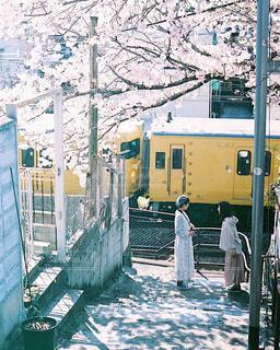 満開の桜の写真・画像素材[4301860]