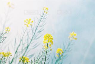 春と空の写真・画像素材[4332459]