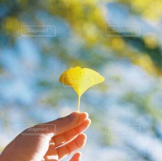 秋の黄色の写真・画像素材[4332490]